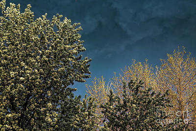 Photograph - Stormy Spring Sky by Jon Burch Photography