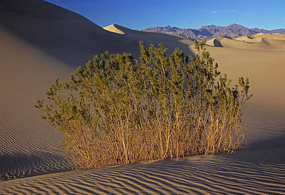 Photograph - Stovepipe Wells Dunes by Doug Davidson
