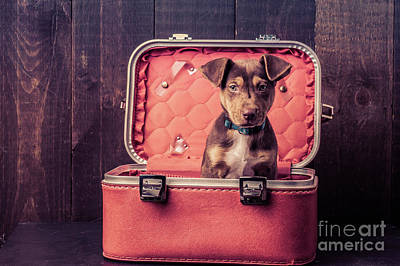 Mutt Photograph - Stowaway  by Edward Fielding