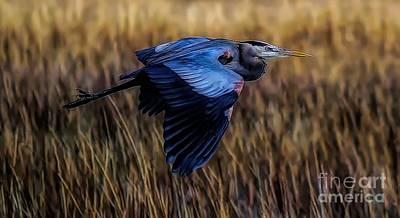 Photograph - Straight Arrow by Paulette Thomas
