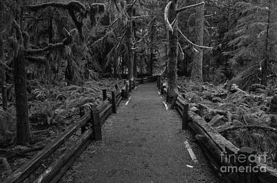 Photograph - Straign Into The Giants - Black And White by Adam Jewell