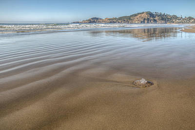 Agate Beach Oregon Photograph - Stranded by Kristina Rinell