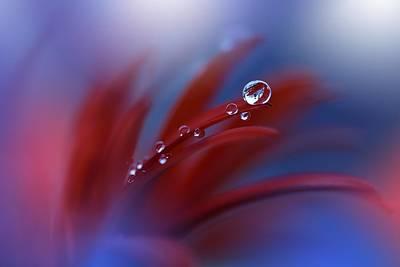 Photograph - Strange Feelings... by Juliana Nan