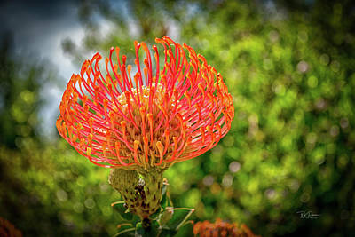 Photograph - Strange Flower by Bill Posner