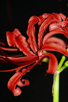 Photograph - Strange Red Flower by Karen Musick