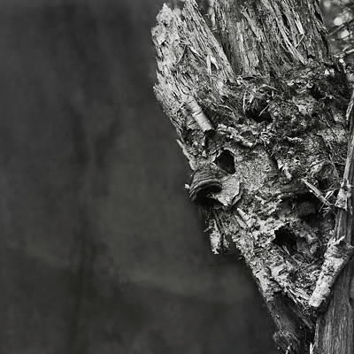 Photograph - Strange Wood by Susan Capuano