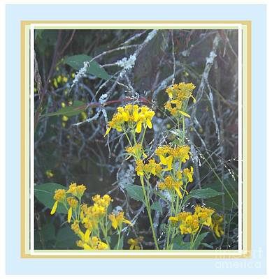 Photograph - Strange Yellow Weeds by Shirley Moravec