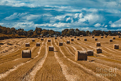 Moody Trees Rights Managed Images - Straw bales in a field Royalty-Free Image by Marc Daly