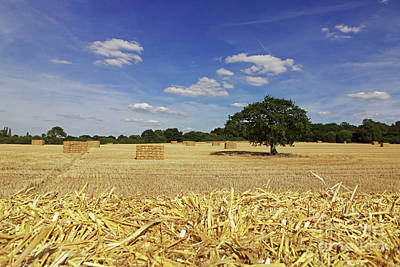 Photograph - Straw Bales Surrey by Julia Gavin