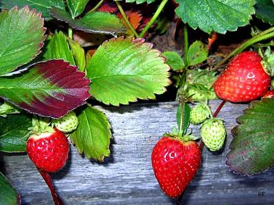 Photograph - Strawberries by Will Borden