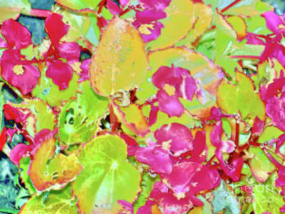 Photograph - Strawberry Begonias by Shirley Moravec