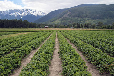 Photograph - Strawberry Fields Forever Pemberton B.c Canada by Pierre Leclerc Photography