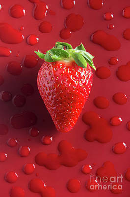 Photograph - Strawberry Fresh One by Carlos Caetano