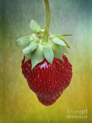 Photograph - Strawberry by Inge Riis McDonald