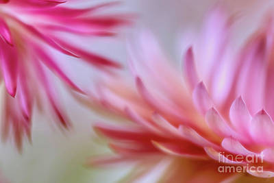 Abstract Flowers Royalty-Free and Rights-Managed Images - Strawflowers 2 by Veikko Suikkanen