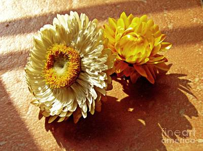 Photograph - Strawflowers On The Window Sill 5 by Sarah Loft