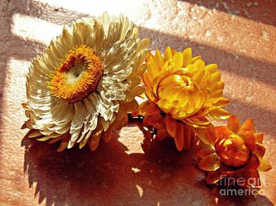 Photograph - Strawflowers On The Window Sill 6 by Sarah Loft