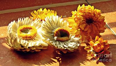 Photograph - Strawflowers On The Window Sill 8 by Sarah Loft