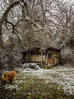 Photograph - Stray And Decay by Stacy Sikes