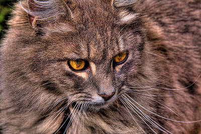 Feline Photograph - Stray Cat by David Patterson