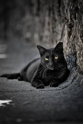 Photograph - Stray Cat by Edgar Laureano