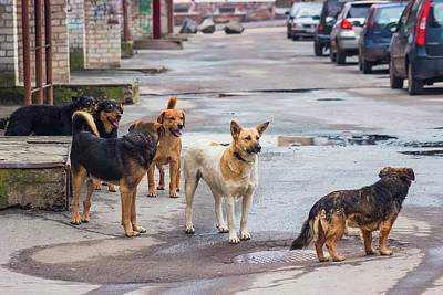 Stray Dogs On Street Original