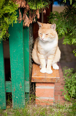 Homeless Pets Photograph - Stray Waif Red Cat Sitting by Arletta Cwalina