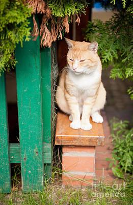 Waif Photograph - Stray Waif Red Cat Sitting by Arletta Cwalina