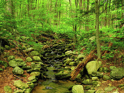 Photograph - Stream Crossing In Connecticut by Raymond Salani III