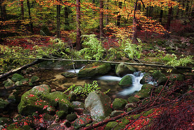 Magical Place Photograph - Stream In Autumn Forest by Artur Bogacki
