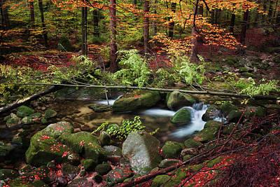 Stream In Autumn Forest Art Print