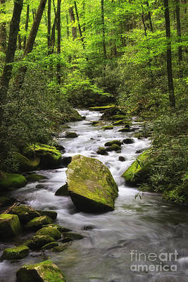 Photograph - Stream In Joyce Kilmer Forest by Jill Lang