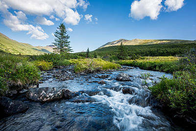 Photograph - Stream In Summer by Tim Newton