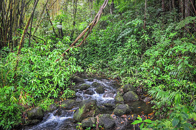 Photograph - Stream In The Rainforest by Denise Bird