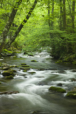 Stream In The Smokies Art Print by Andrew Soundarajan
