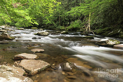 Photograph - Stream In The Smokies by Nicki McManus