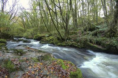 Woodland Photograph - Stream In The Wood by Phil Tomlinson