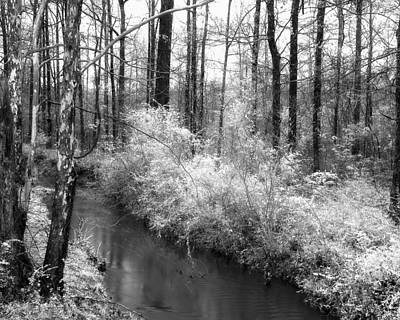 Stream In The Woods Art Print by Fred Baird