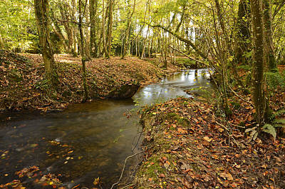 Stream In The Woods Art Print by Martina Fagan