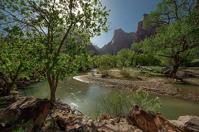 Photograph - Stream In Zion National Park by Mike Shaw