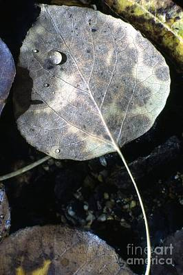 Landscap Photograph - Stream Leaf by Norman Andrus