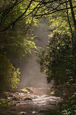 Safari - Stream Light by Steve Gadomski