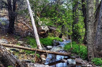 Stream Line Through Nature Art Print