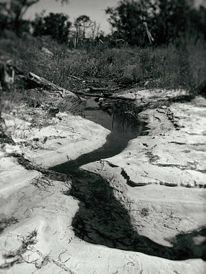 Photograph - Stream of Consciousness by Lynne Mitchell