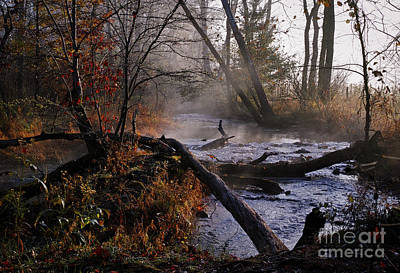 Photograph - Stream Of Tranquility by Douglas Stucky
