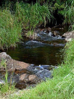 Photograph - Stream by Pamela Walton