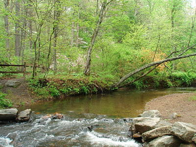 Photograph - Stream Resting Place by Allen Nice-Webb