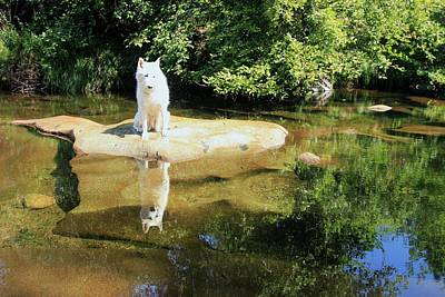 Photograph - Stream Serenity by Sean Sarsfield