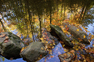 Photograph - Stream Side Reflections by Mike Eingle