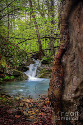 Photograph - Stream Wonder by Larry McMahon